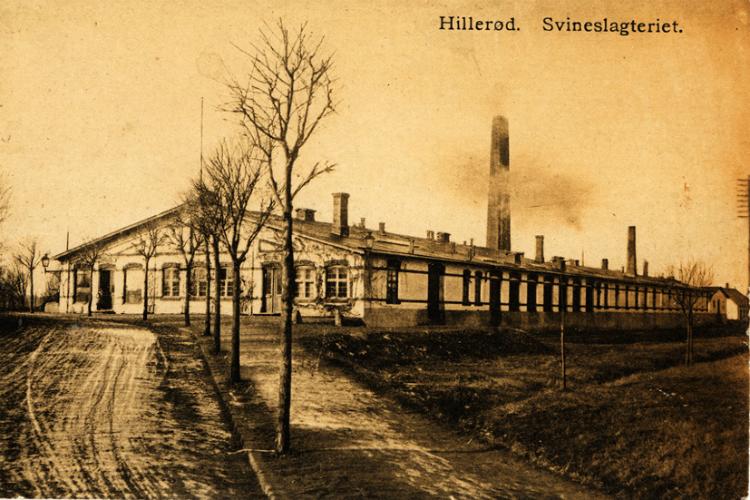 Hillerød Svineslagteri. Postkort. 1903-1914