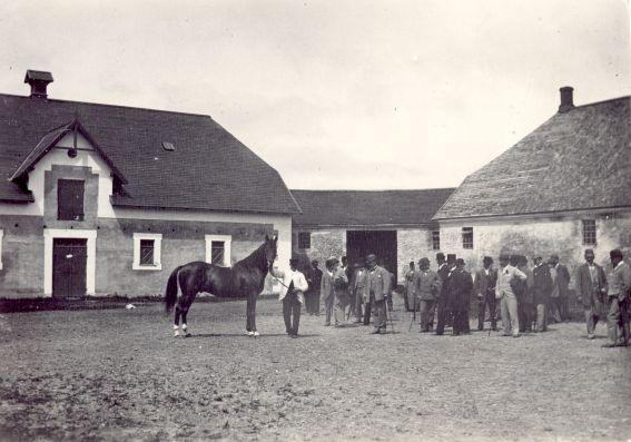 Hesteauktionsdag på Det Kongelige Stutteri på Hillerødsholm. Ca. 1900