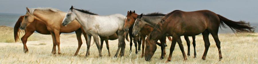 Fang Fortællingen - Heste
