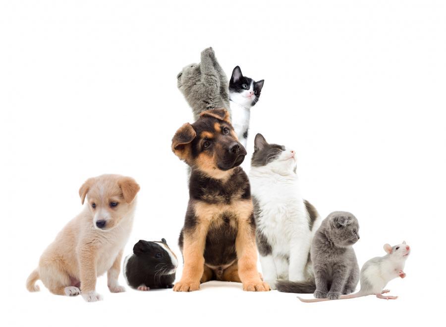 Hundehvalpe og kattekillinger