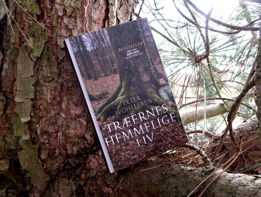 Bogen Træernes hemmelige liv på gren i træ